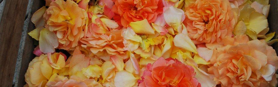 empathische Kommunkation wie ein Rosenbouquet